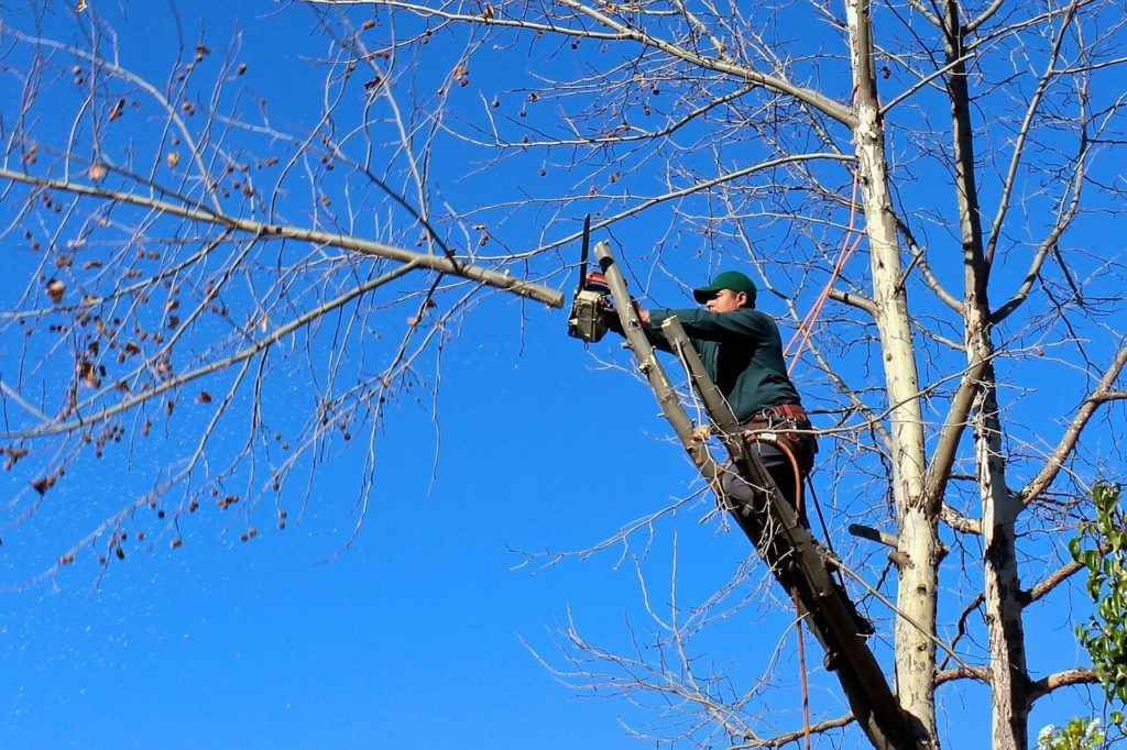 Contact Us-Cutler Bay FL Tree Trimming and Stump Grinding Services-We Offer Tree Trimming Services, Tree Removal, Tree Pruning, Tree Cutting, Residential and Commercial Tree Trimming Services, Storm Damage, Emergency Tree Removal, Land Clearing, Tree Companies, Tree Care Service, Stump Grinding, and we're the Best Tree Trimming Company Near You Guaranteed!