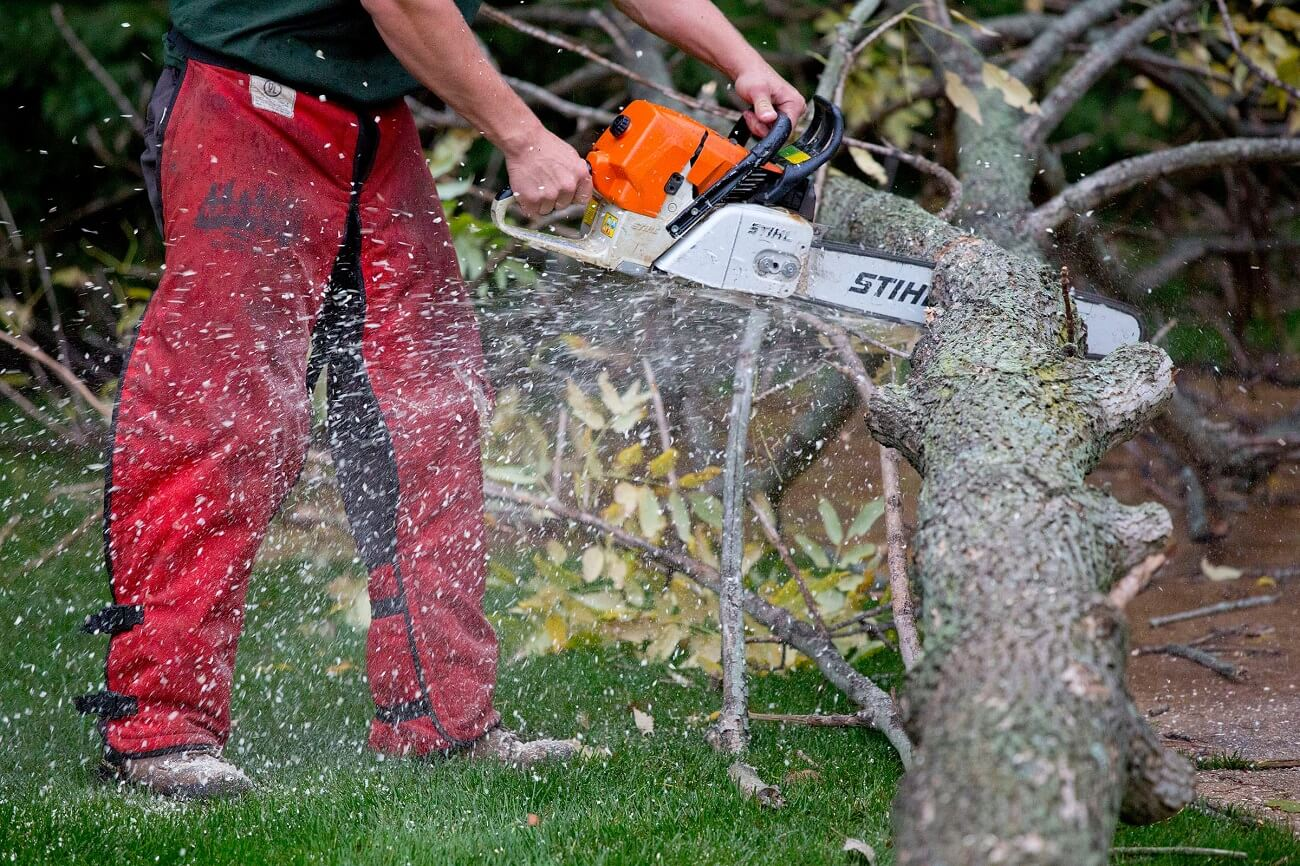 Cutler Bay FL Tree Trimming and Stump Grinding Services Home Page-We Offer Tree Trimming Services, Tree Removal, Tree Pruning, Tree Cutting, Residential and Commercial Tree Trimming Services, Storm Damage, Emergency Tree Removal, Land Clearing, Tree Companies, Tree Care Service, Stump Grinding, and we're the Best Tree Trimming Company Near You Guaranteed!