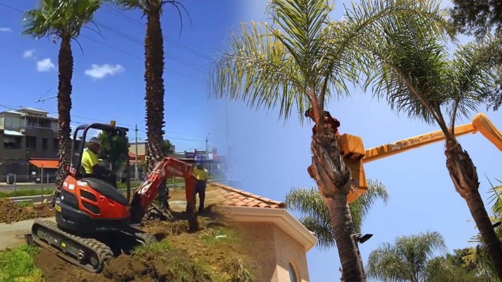 Palm tree trimming & palm tree removal-Cutler Bay FL Tree Trimming and Stump Grinding Services-We Offer Tree Trimming Services, Tree Removal, Tree Pruning, Tree Cutting, Residential and Commercial Tree Trimming Services, Storm Damage, Emergency Tree Removal, Land Clearing, Tree Companies, Tree Care Service, Stump Grinding, and we're the Best Tree Trimming Company Near You Guaranteed!