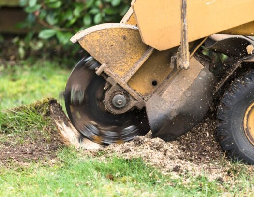 Stump Grinding-Cutler Bay FL Tree Trimming and Stump Grinding Services-We Offer Tree Trimming Services, Tree Removal, Tree Pruning, Tree Cutting, Residential and Commercial Tree Trimming Services, Storm Damage, Emergency Tree Removal, Land Clearing, Tree Companies, Tree Care Service, Stump Grinding, and we're the Best Tree Trimming Company Near You Guaranteed!