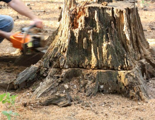Stump Removal-Cutler Bay FL Tree Trimming and Stump Grinding Services-We Offer Tree Trimming Services, Tree Removal, Tree Pruning, Tree Cutting, Residential and Commercial Tree Trimming Services, Storm Damage, Emergency Tree Removal, Land Clearing, Tree Companies, Tree Care Service, Stump Grinding, and we're the Best Tree Trimming Company Near You Guaranteed!