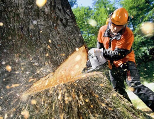 Tree Cutting-Cutler Bay FL Tree Trimming and Stump Grinding Services-We Offer Tree Trimming Services, Tree Removal, Tree Pruning, Tree Cutting, Residential and Commercial Tree Trimming Services, Storm Damage, Emergency Tree Removal, Land Clearing, Tree Companies, Tree Care Service, Stump Grinding, and we're the Best Tree Trimming Company Near You Guaranteed!